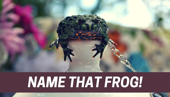 Name That Frog